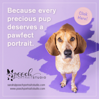 Pooch Portrait Studio: https://www.poochportraitstudio.com