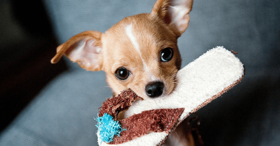 Pet services in the Store Reporter Services Guide